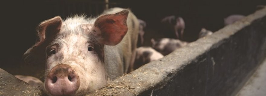 The corporate responsibility to respect animal welfare