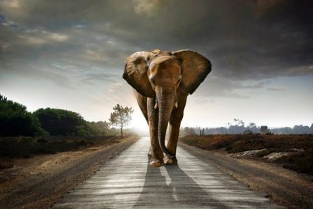 Traditional legal methodology: What if you have never seen an elephant before?