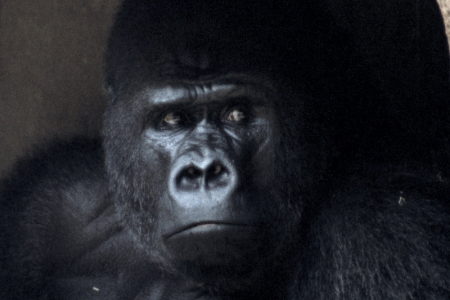 The Justifiability of Zoos